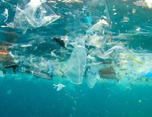 Em parceria com aceleradora de SC, programa global busca inovação para reduzir impacto do plástico nos oceanos